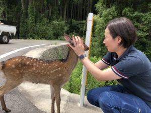 熊本県阿蘇市の野生の子鹿とのふれあい写真